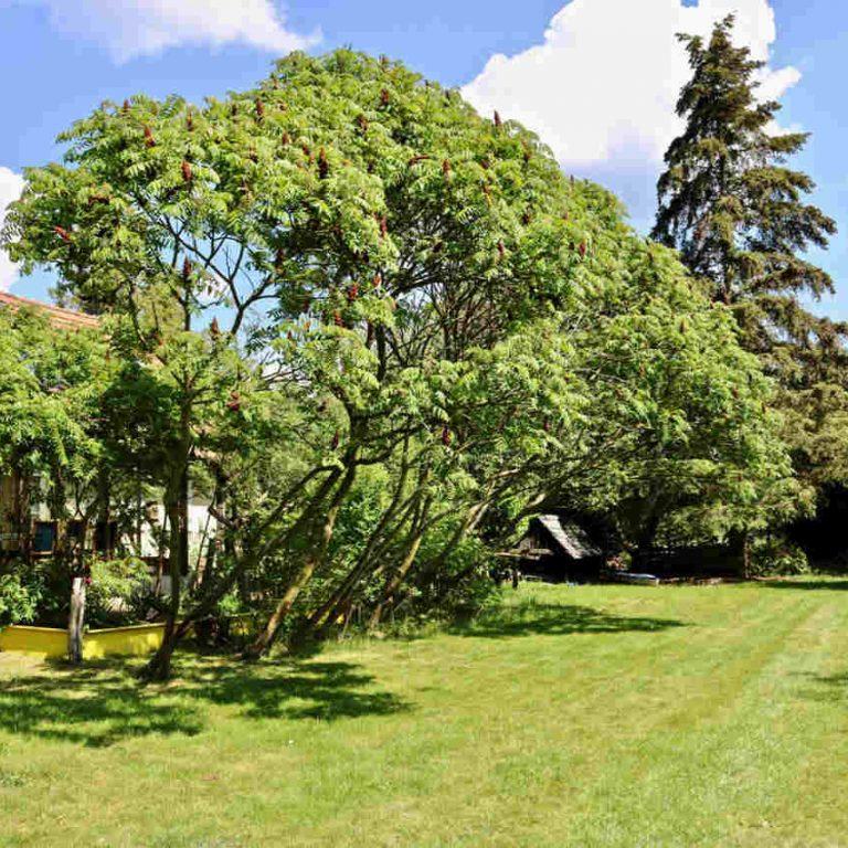 garden schilka1